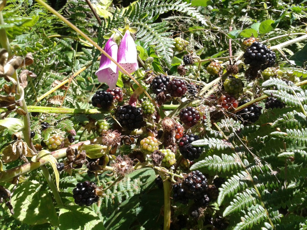 2013-08-19 Blackberries