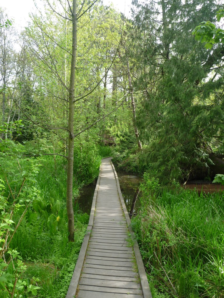 Reed College Lake Path